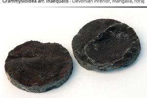 Grammysioidea aff inaequalis, Devonian inferior, Mangalia, foraj